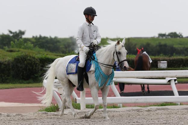 誘導馬 ウイニー_1(19/08/29)