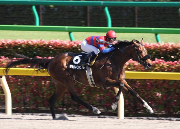 マチカネニホンバレ レース(09/04/26・横浜ステークス)