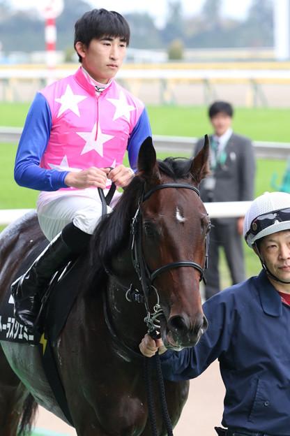 トーラスジェミニ(18/11/04・百日草特別)