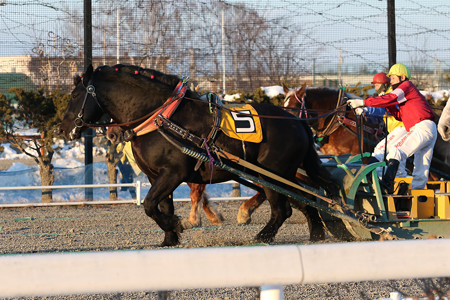 コマサンブラック レース_1(20/02/09・7R)