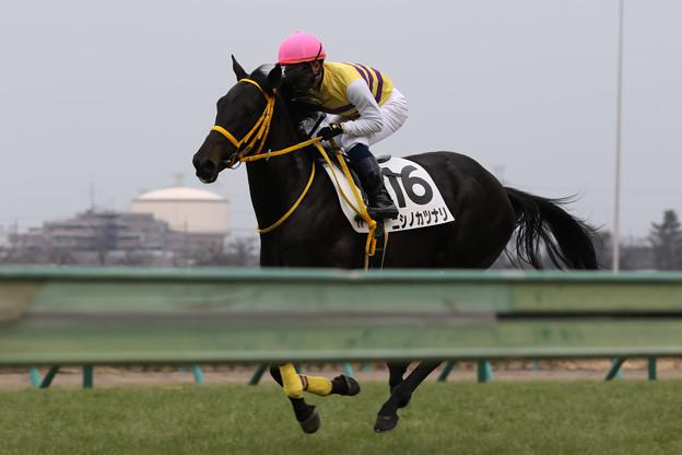 ニシノカツナリ 返し馬(19/01/12・新馬戦)