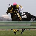 Photos: ニシノカツナリ 返し馬(19/01/12・新馬戦)