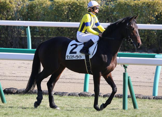ダンスディライト 返し馬(19/01/05・新馬戦)