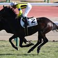 ダンスディライト レース(19/01/05・新馬戦)