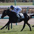 ヒシゲッコウ レース(19/01/05・新馬戦)