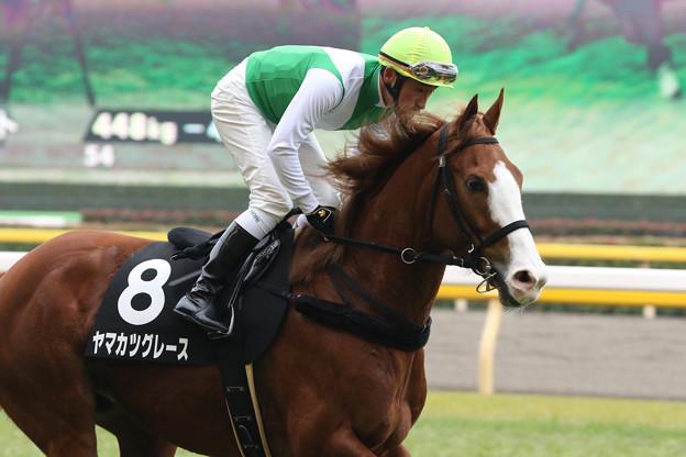 ヤマカツグレース 返し馬(20/02/16・初音ステークス)