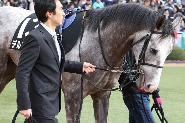 デルマオニキス パドック(20/01/12・黒竹賞)