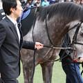 Photos: デルマオニキス パドック(20/01/12・黒竹賞)