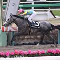 Photos: デルマオニキス レース(20/01/12・黒竹賞)
