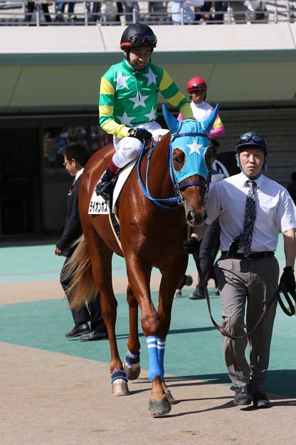 Photos: ライオンボス パドック(17/10/09・新馬戦)