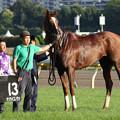 Photos: グリーンチャンネルカップ 口取り(17/10/09)