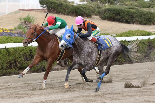 クールフォール レース(20/01/17・姫路和牛特別)