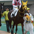 Photos: ウインリベロ パドック(19/11/23・4R)