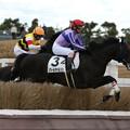Photos: ノワールギャルソン レース(18/12/08・5R)