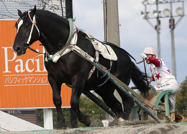 マツリダワッショイ レース(17/09/24・5R)