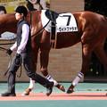 Photos: ワイドファラオ パドック(18/12/08・7R)