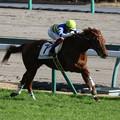 Photos: ワイドファラオ レース(18/12/08・7R)