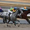 Photos: ファビラスヒーロー レース(18/12/08・3R)