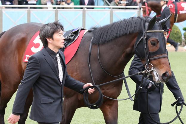 エポカドーロ パドック(18/03/18・第67回 フジテレビ賞スプリングステークス)