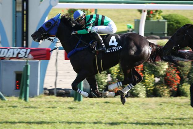 サムシングジャスト レース(19/11/09・宝ケ池特別)