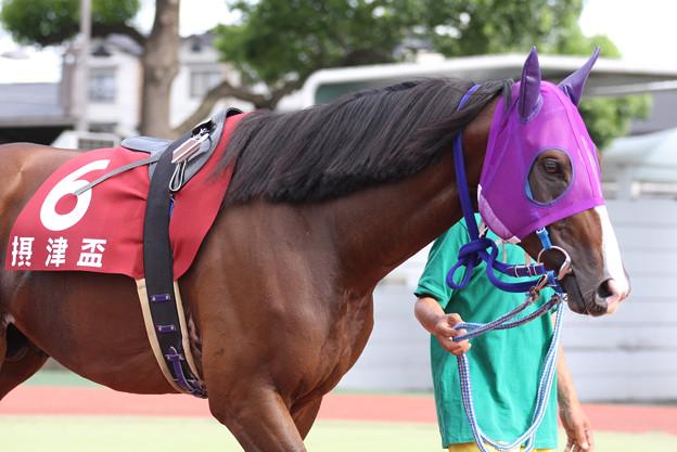 モエレトレジャー パドック_1(08/08/14・第40回 摂津盃)