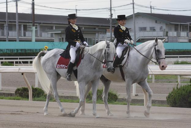 ロングマリーンとマコーリー_2(08/08/14・第40回 摂津盃)