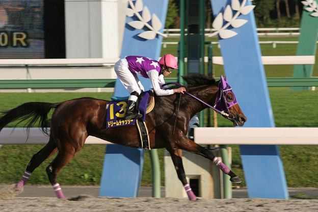 ドリームチャッター レース(05/10/09・第31回 ビューチフル・ドリーマーカップ)
