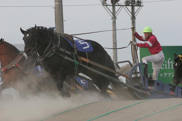 ハヤテショウリキ レース(07/05/12・新緑特別)
