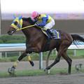 Photos: キクノサンデー レース(05/10/16・第40回 サラブレッド大賞典)
