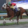 Photos: チヨノドラゴン レース(06/10/15・第41回 サラブレッド大賞典)