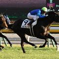 Photos: ソロフレーズ レース(19/01/26・12R)