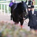 Photos: ブラックスピネル(19/01/26・白富士ステークス)
