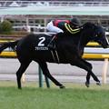 Photos: ブラックスピネル レース(19/01/26・白富士ステークス)