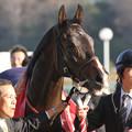 Photos: フェイムゲーム_1(14/02/22・第64回 ダイヤモンドステークス)