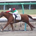 Photos: シゲルスピネル レース(19/01/12・1R)