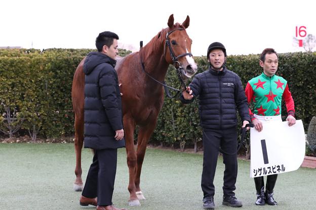 シゲルスピネル 口取り(19/01/12・1R)