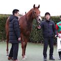 Photos: シゲルスピネル 口取り(19/01/12・1R)