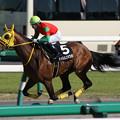 Photos: マイネルユキツバキ レース(19/04/13・下総ステークス)