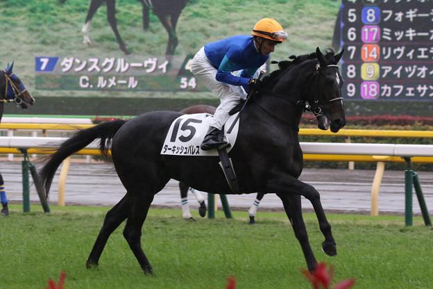 ターキッシュパレス 返し馬(19/11/23・新馬戦)