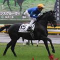 Photos: ターキッシュパレス 返し馬(19/11/23・新馬戦)