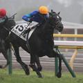 Photos: ターキッシュパレス レース(19/11/23・新馬戦)