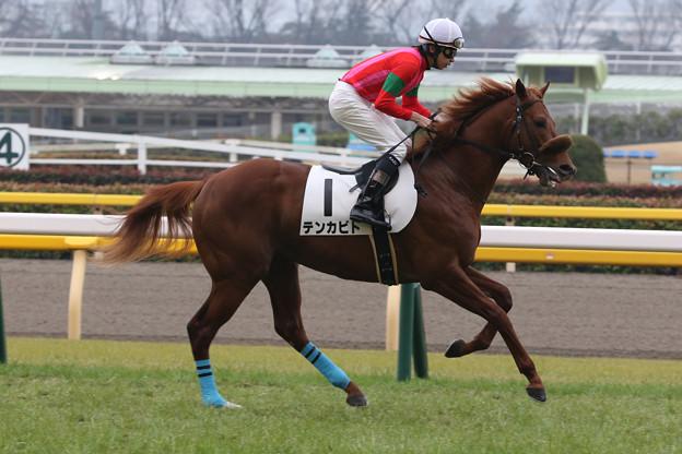 テンカビト 返し馬(20/02/16・5R)