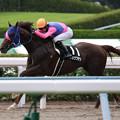 Photos: メイショウワザシ レース(19/07/27・薩摩ステークス)