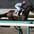 Photos: サラーブ 返し馬(19/03/09・12R)