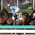 Photos: サラーブ レース(19/03/09・12R)