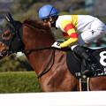 Photos: ヴェンジェンス 返し馬(19/03/09・ポラリスステークス)