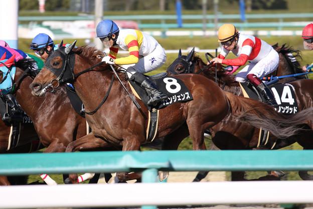 ヴェンジェンス レース_1(19/03/09・ポラリスステークス)