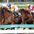 Photos: ヴェンジェンス レース_1(19/03/09・ポラリスステークス)