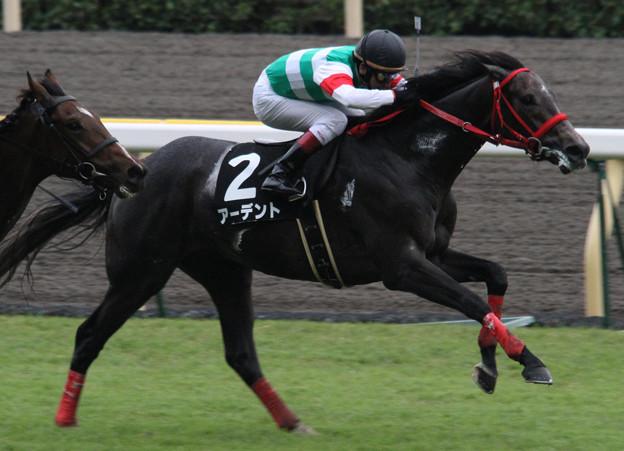Photos: アーデント レース(11/10/22・いちょうステークス)