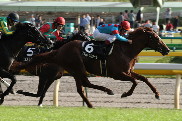 フラムドグロワール レース(12/10/20・いちょうステークス)